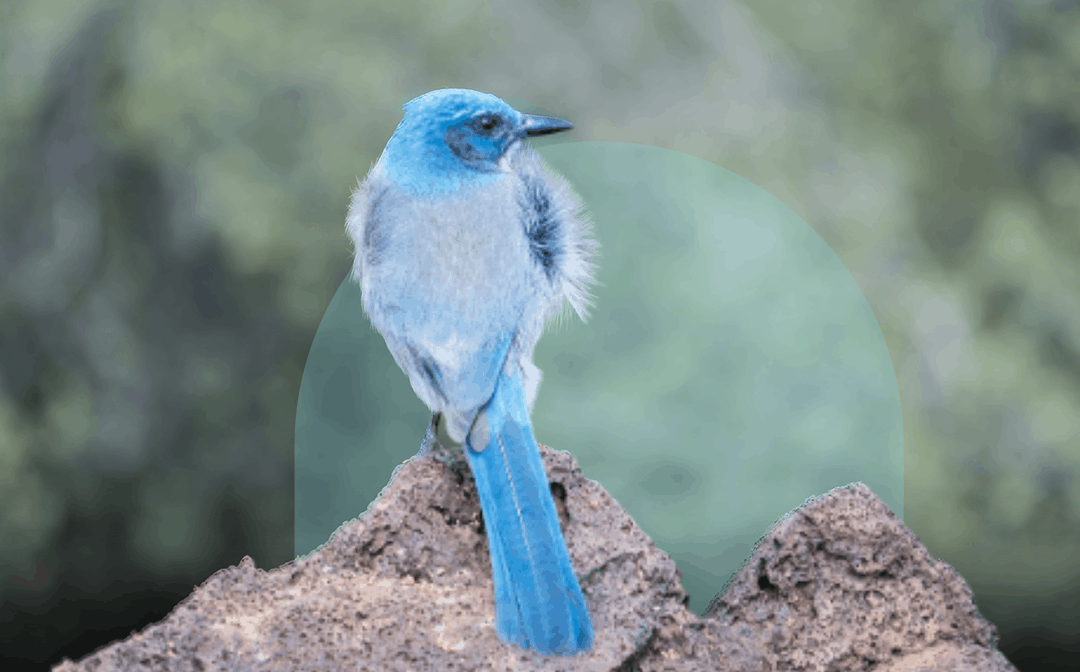 Pattern Energy Makes Significant Contribution to Protect New Mexico's Imperiled Bird Species